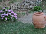 All the beautiful flowers and terracotta pots...