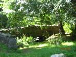 Castlewellan park