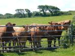 Penpol Farm