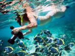snorkeling in Tulum's coral reef