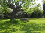 Our garden and one of the big tree