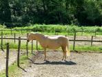 tenuta vallelunga  horse riding school