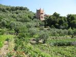 our house and vinyards from Casa Bianca come visit for a tasting
