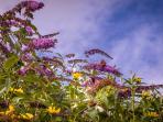 Beadnell Beach Gardens & Butterflies