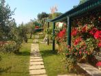 Olive trees panoramic garden path
