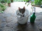 Kitty in a Bucket