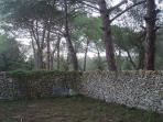 un piccolo cortile in una vasta pineta accessibile all'ospite