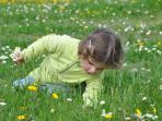 Discovering spring wild flowers in the park