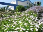 Springtime flowers at Alto do Perogil's gardens