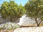 Orange & lemon trees at Casa Vista Montanha!