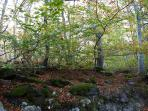 Hayedo del parque natural del Moncayo