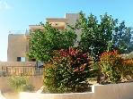 Our protected Carob tree