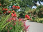 Ventnor Botanical Garden - Britain's hottest garden