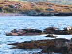 Seals on nearby rocks