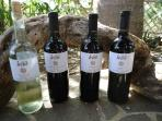 Certified Organic Wines served at Cob Cottage, Finca Los Arboles