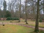 semi ancient woodland for exploring