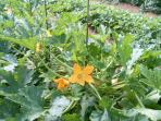 prodotti azianda bio