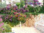 Part of the terraced garden