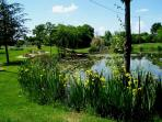 Another view from the back of the pond, and its numerous water lilies, irises, froggs, dragonflies..