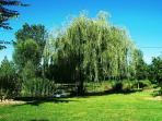 The shadow of the weeping willow allows you to take a nap next to the pond ...