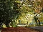 New forest, just a ten minute drive away, great for walks, picnics and nature spotting.