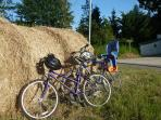 Bikes for all, enjoy cycling on quiet country lanes