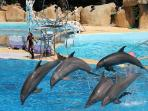 Marineland in Antibes - daily and evening shows (22 min drive)