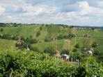 Lendava vineyards on the Hungarian border