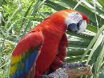 Loro Parque (Parrot Park) a must for the kids
