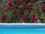 Roses arround