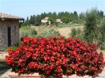 Tuscany vacation rental villa Castellare de sernigi