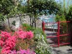 may azaleas in blossom