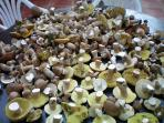 Fabuleuse cueillette de cèpes a l'automne