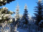 Autour du chalet en hiver