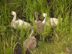 De nombreuses espèces d'oiseaux ont élu domicile sur l'étang classé en zone natura 2000