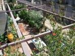 Top roof garden