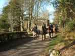 Country Life - a beautiful day for the hunt on Mill Farm and in Foulkesmill