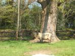 For the hotter days guests can choose from one of the many mature trees to take shade from the sun