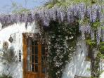Spring at Casa Siempre