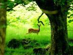 Wildlife is bountiful and wonderous