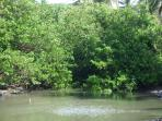 Local lagoon