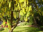spring garden Little Haven