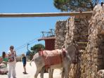Donkey ride on top of mount Calmorro,Benalmadena