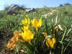 I colori della Murgia in primavera