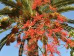 House palm tree