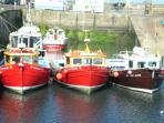 Seahouses boat trips to Farne Islands