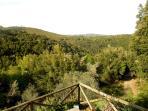 Vista estate dal giardino / summer garden view
