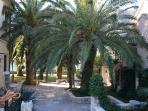 The garden, mature palm trees, orange , lemon, mandarine kaki and many flowers