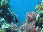 Plenty of opportunity to scuba dive