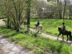 Pony trek through the forest